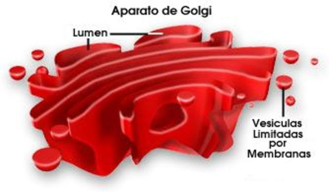 Aparell de Golgi