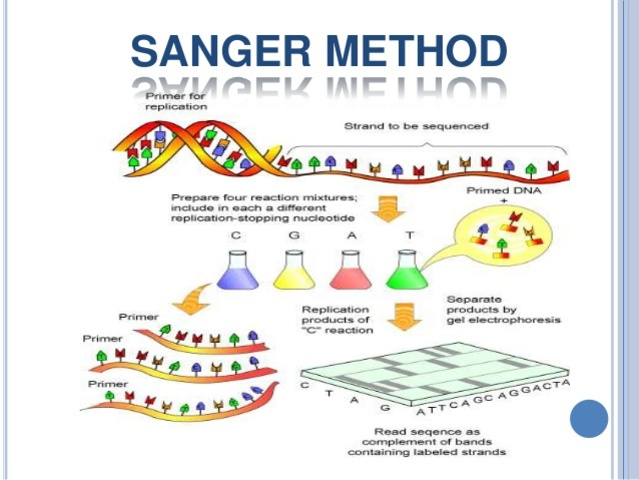 The Sanger Technique is developed