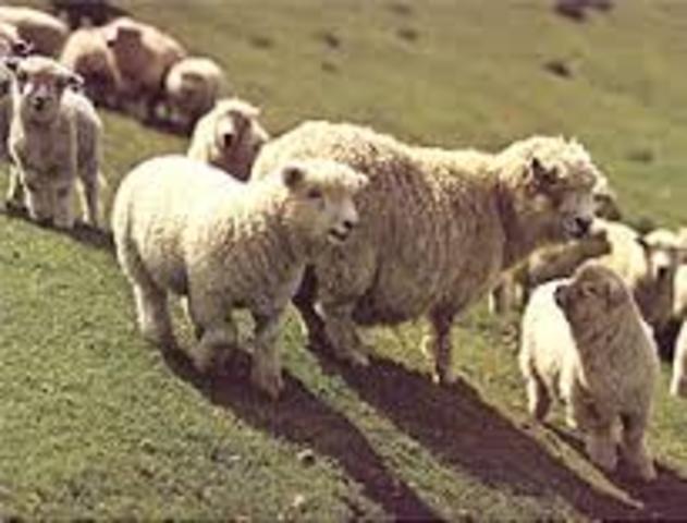 England - Wool Act