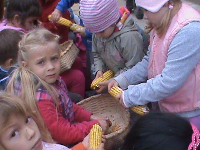 Kukoricázás