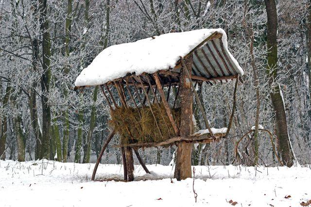 állatok élete télen