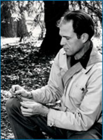 1947- Ensatina described as a ring species