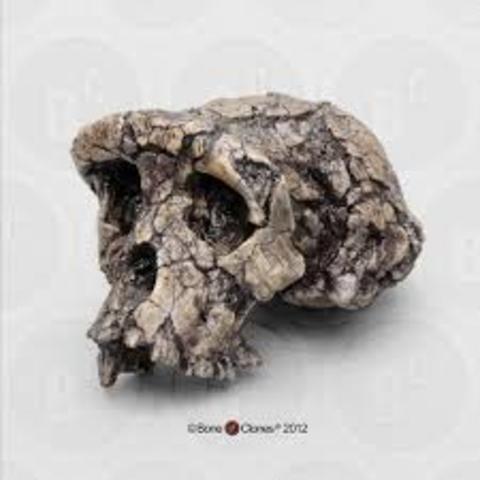 2001- Sahelanthropus tchadensis fossil discovered