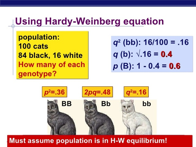 1908-  Hardy and Weinberg independently develop the Hardy-Weinberg equation for determining allele frequencies in populations