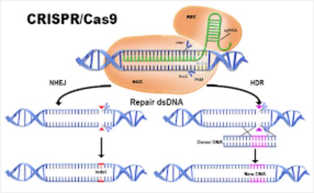 1993-- CRISPr/CAS 9 is identified and described