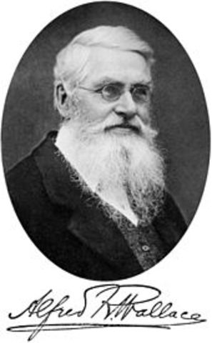 Alfred Russel Wallace published ideas of evolutionary processes