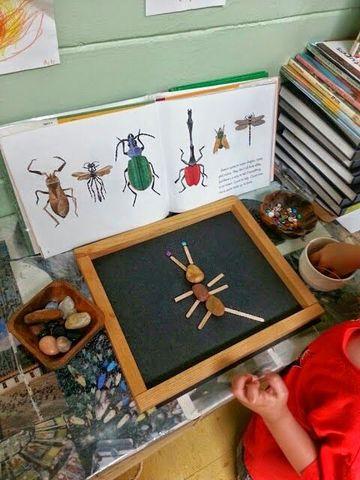 Rovarfajok határozása, a rovarok testfelépítése