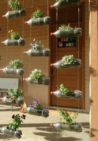 A növények felépítésének megfigyelése