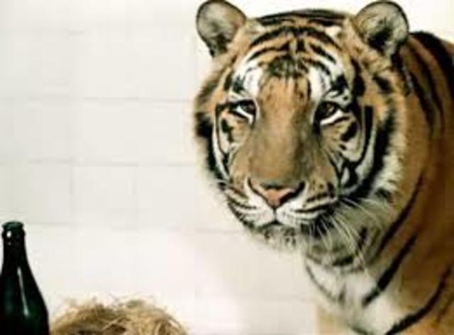 Тигр Пурш.