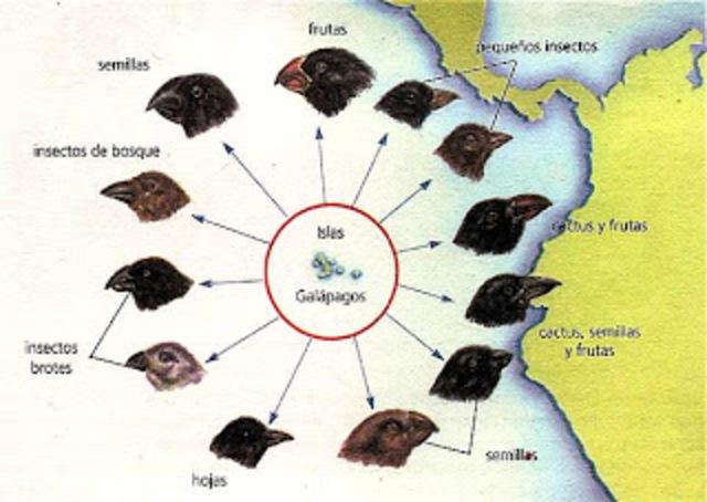 Islas Galápagos II