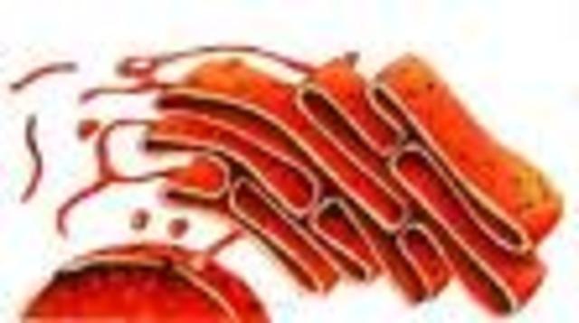Reticle endoplasmàtic