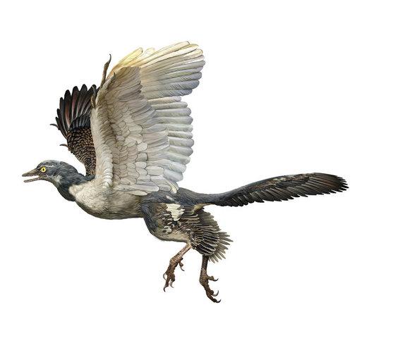 Birds (150 mya)