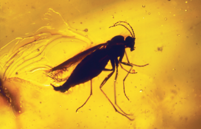 Insects (400 mya)
