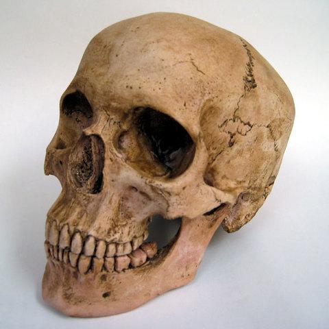 HOMO SAPIENS (200,000 years ago)