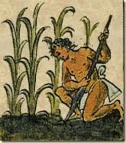 Origenes de la Agricultura