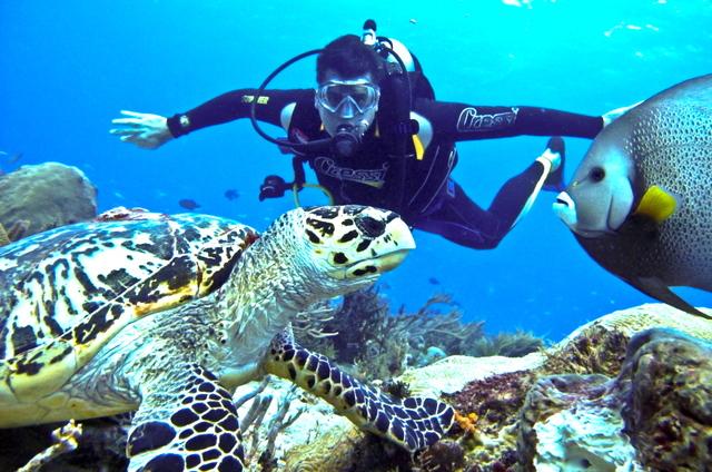 Reglamento de la prestación del sector turismo de buceo