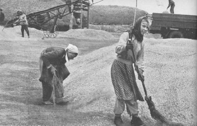 La colectivización agraria