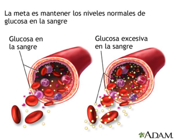 La glucosa