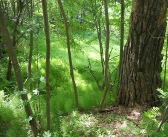 Международный день леса