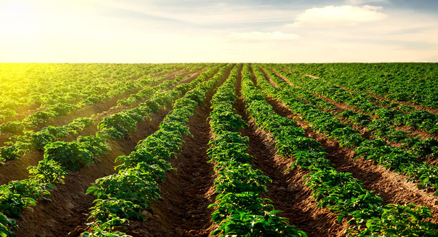 Casi la mitad de las personas dedicadas a la agricultura poseían tierra –ejidal o privada.