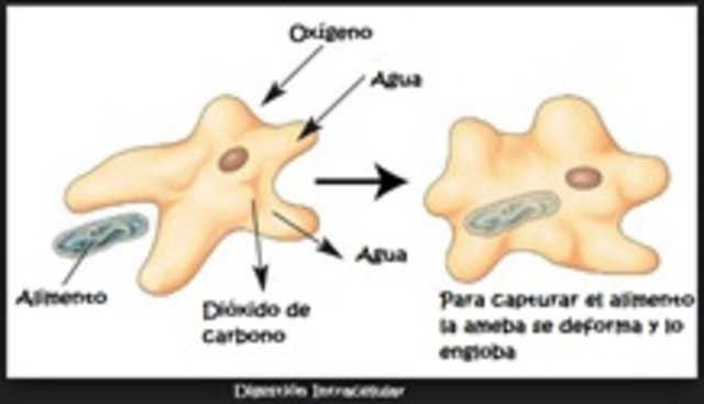 Primeras Bacterias
