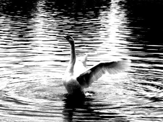 """""""Canto del Cisne"""""""