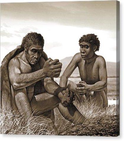 Corrección - Homo Ergaster