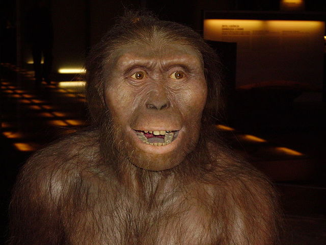 Australopithecus (hace 350000-2500000 años)
