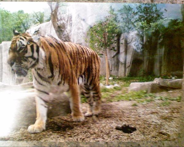 The Milwaukee Zoo