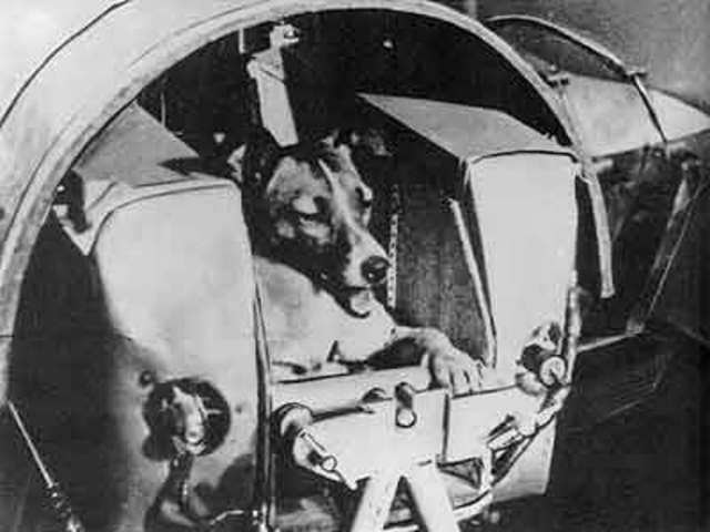 Sputnik 2 - Laika