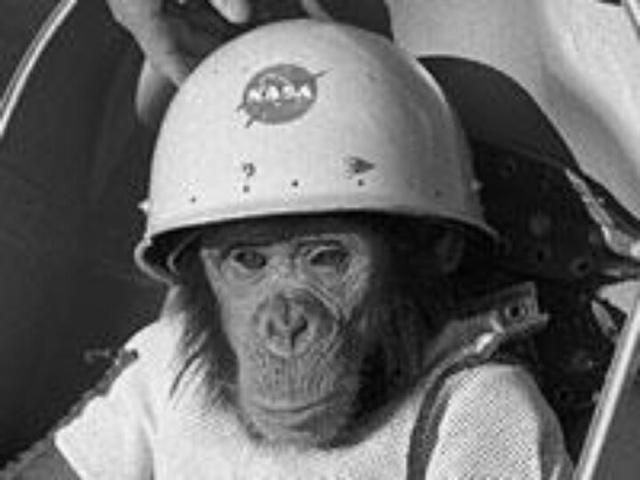 Ham - Amerikanernes første levende væsen i rummet