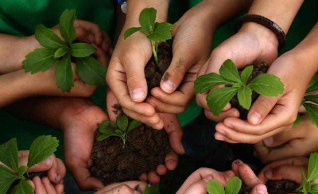 Programa internacional de la Educación Ambiental