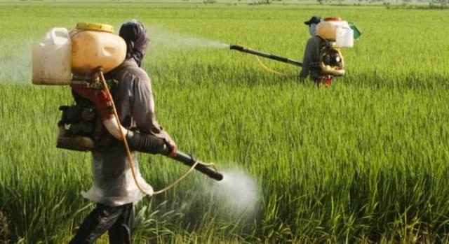 4. Les pesticides
