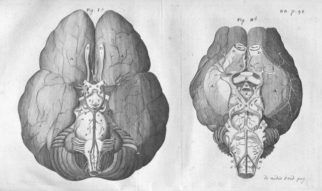 Thomas Willis Published First Brain Anatomy Atlas