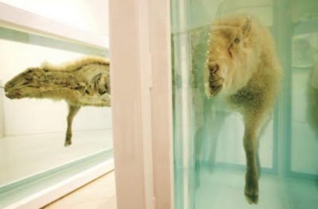 Dead Animals Exhibition by Damien Hirst