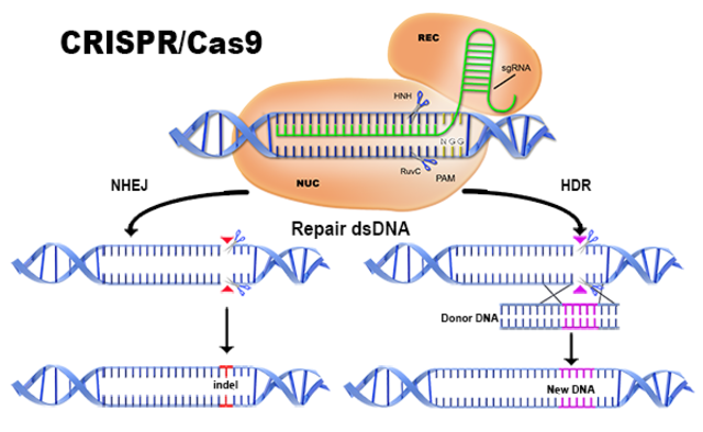 CRISPr-CAS9 is Identified
