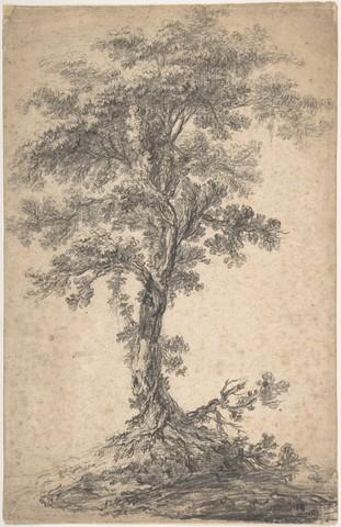 JEAN PILLEMENT «étude d'arbre»