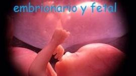 desarrollo embrionario y fetal  timeline