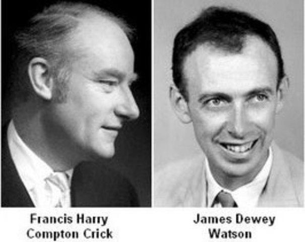James Watson  y Francis Crick