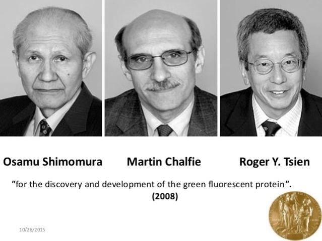 Descubrimiento y desarrollo de la proteina verde fluorescente (GFP)