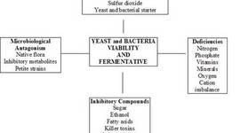 History of Fermentation timeline