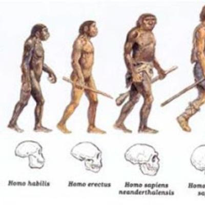 Evolución del Hombre timeline