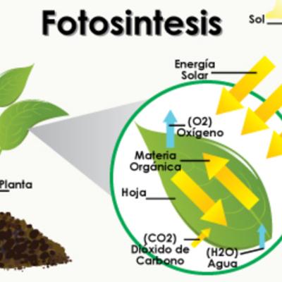 Historia de la Fotosíntesis  timeline