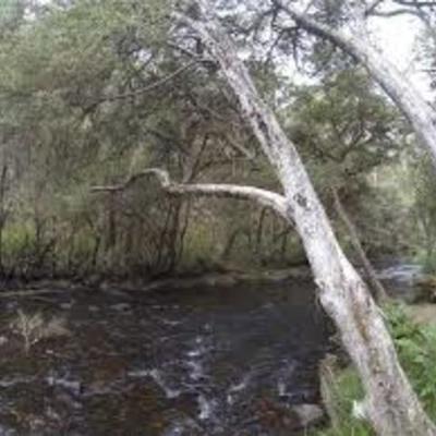 Big River Human History timeline