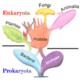 220px tree of living organisms 2