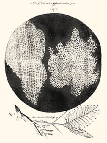 Robert Hooke: observación primera célula