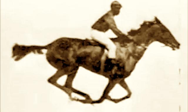 25K Horse Bet