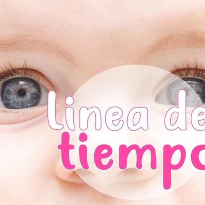 Desarrollo embrionario del globo ocular. timeline