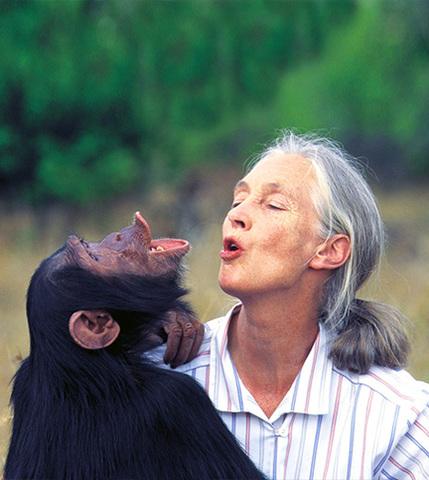 Experta en Chipancés. (Jane Goodall)