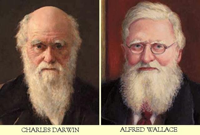La selección natural de Darwin y Wallace